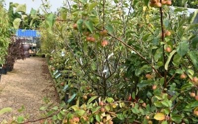 The Principle of Pruning Apples Trees