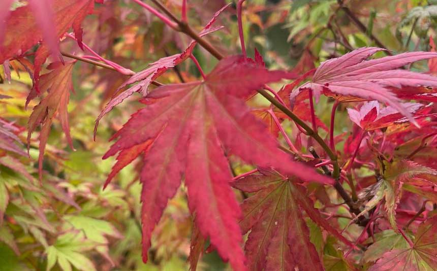Beautiful colours of autumn at Bumbles