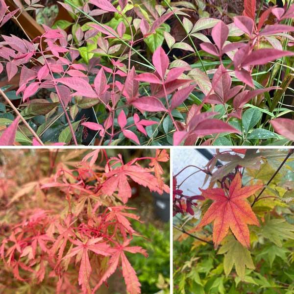 Autumn colours at Bumbles, October 2021