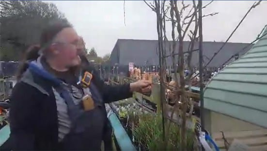 How to Train and Prune Wisteria - instructional video with Ross Wardman at Bumbles