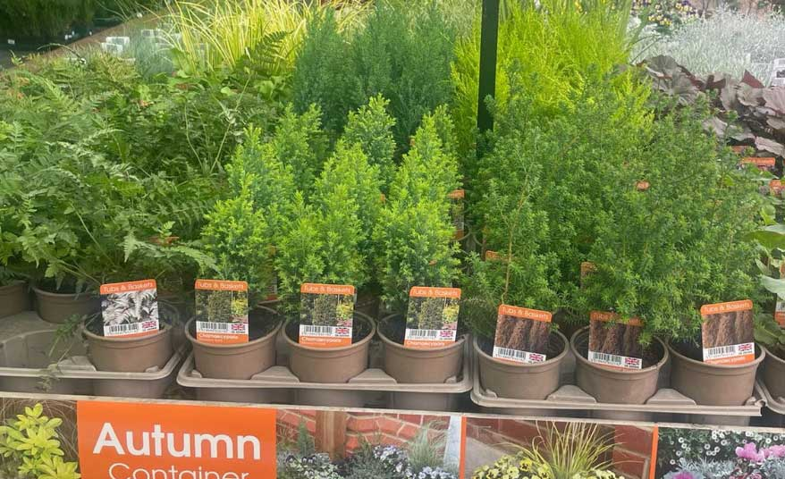 Autumn Container planting at Bumbles, September 2021