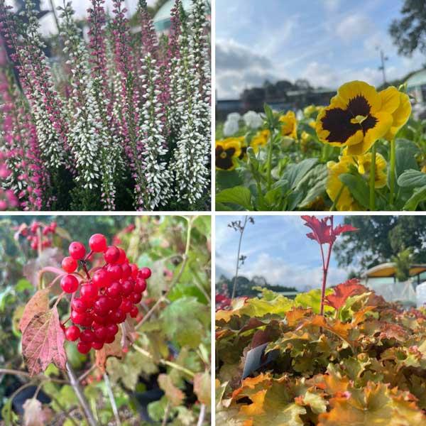 September Plant Inspiration at Bumbles, 2021