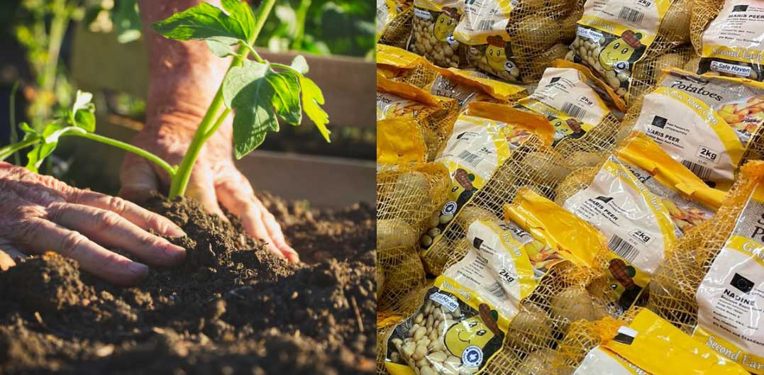 Getting started with growing seed potatoes, February in the garden with Bumbles 2021
