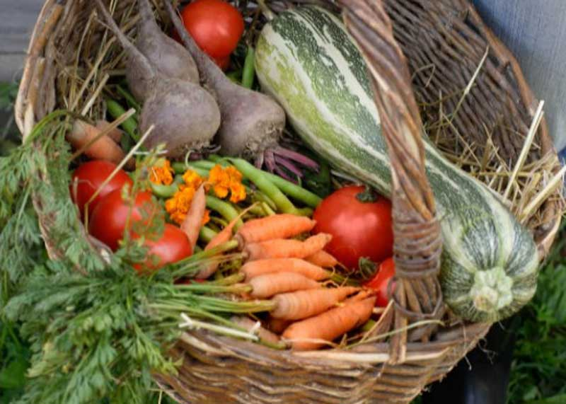 Vegetable Plants now in stock