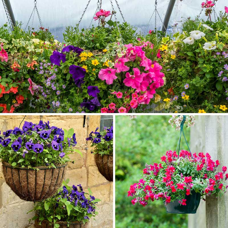 Refill your hanging baskets and troughs at Bumbles, April 2021