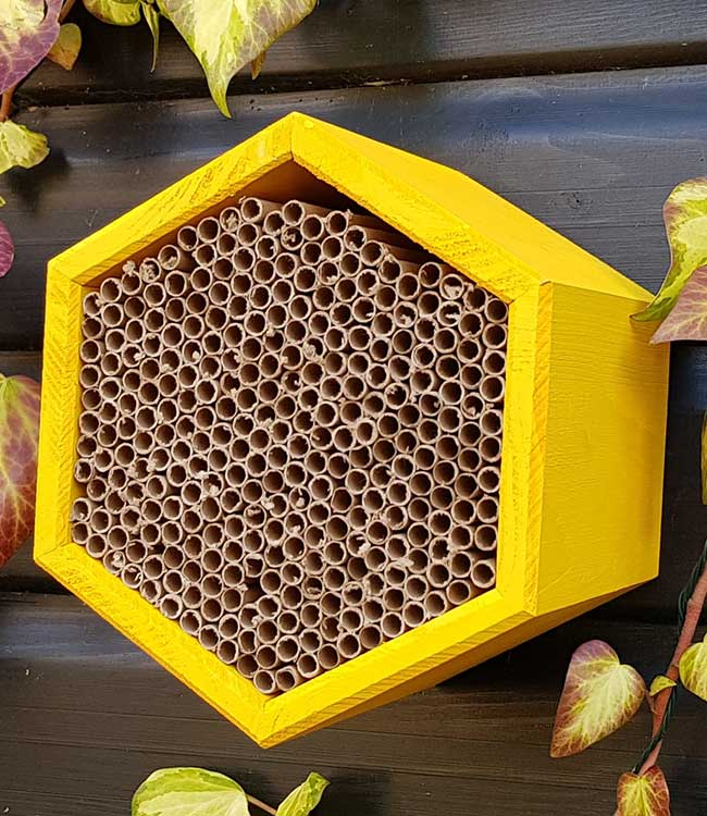 Buy Solitary Honeycomb Insect House at Bumbles