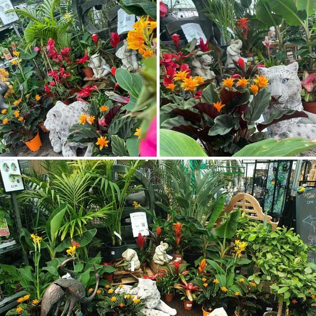 Tropical & indoor houseplants at Bumbles, June 2021