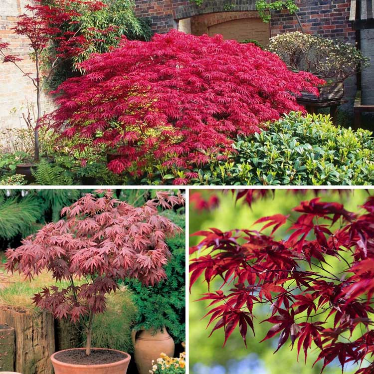 Acers special offer at Bumbles, July 2021