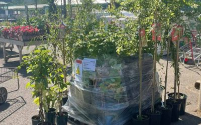 Trees for autumn planting