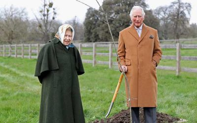 Plant a Tree for the Jubilee!
