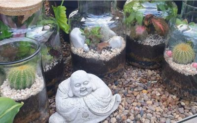 Terrariums – ready made or create your own!